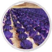 Lavender Study - Marignac-en-diois Round Beach Towel