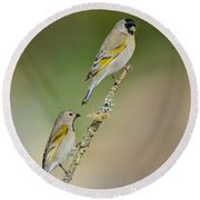 Lawrence Goldfinch Pair On Branch Round Beach Towel