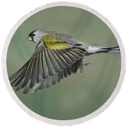 Lawrences Goldfinch Round Beach Towel