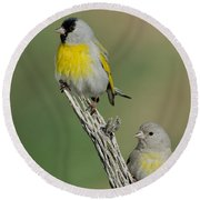 Lawrences Goldfinch Pair On Perch Round Beach Towel