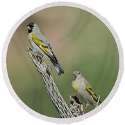 Lawrences Goldfinch Pair Perched Round Beach Towel