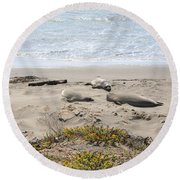 Lazy Seals Round Beach Towel
