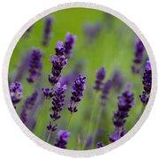 Lea Of Lavender Round Beach Towel