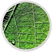 Leaf Abstract - Macro Photography Round Beach Towel
