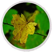 Leaf Caught On A Branch Round Beach Towel