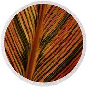 Cannas Plant Leaf Closeup Round Beach Towel