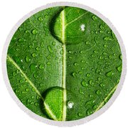 Leaf Dew Drop Number 10 Round Beach Towel