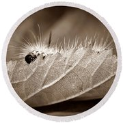 Leaf Muncher Round Beach Towel
