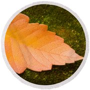 Leaf On Moss Round Beach Towel by Adam Romanowicz