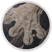 Leaf-tailed Gecko Foot Round Beach Towel