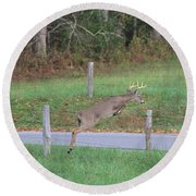 Leaping Buck In Smoky Mountains Round Beach Towel by Dan Sproul