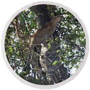 Leaping Leopard Round Beach Towel