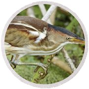 Least Bittern Female Feeding Round Beach Towel