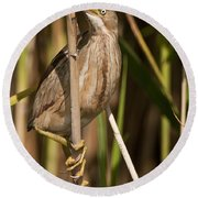 Least Bittern Pictures 14 Round Beach Towel