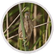Least Bittern Pictures 22 Round Beach Towel
