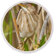 Least Bittern Pictures 35 Round Beach Towel