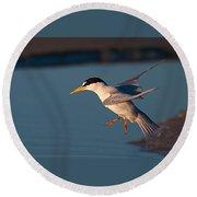 Least Tern In Flight Round Beach Towel