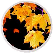 Leaves Of Maple Round Beach Towel