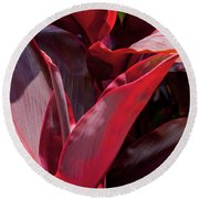 Leaves Of The Red Ti Plant Round Beach Towel