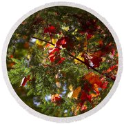 Leaves On Evergreen Round Beach Towel