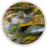 Leaves On The Rocks Round Beach Towel