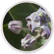 Lei Pua Kalaunu - Crown Flower - Calotropis Gigantea - Asclepiadaceae Round Beach Towel