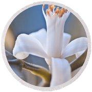 Lemon Blossom Round Beach Towel