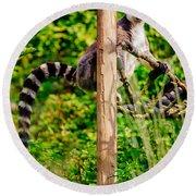 Lemur In The Green Round Beach Towel