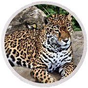 Leopard At Rest Round Beach Towel