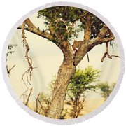 Leopard Eating His Victim On A Tree In Tanzania Round Beach Towel