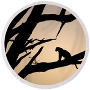 Leopard Sitting In A Tree Round Beach Towel