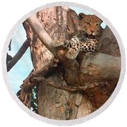 Leopard Up A Tree Round Beach Towel