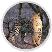 Leopard With African Wild Cat Kill Round Beach Towel