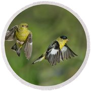 Lesser Goldfinch Pair In Flight Round Beach Towel