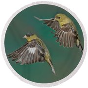 Lesser Goldfinch Pair In The Air Round Beach Towel