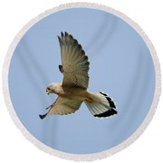 Lesser Kestrel Falco Naumanni Round Beach Towel