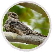 Lesser Nighthawk On Branch Round Beach Towel