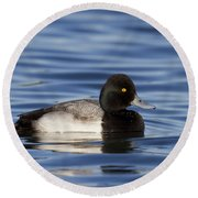 Lesser Scaup Round Beach Towel