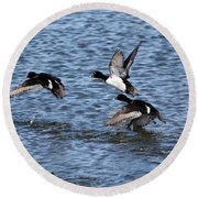 Lesser Scaup Ducks Round Beach Towel