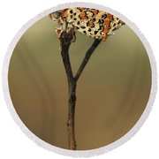 Lesser Spotted Fritillary Round Beach Towel by Alon Meir