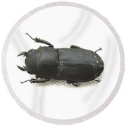 Lesser Stag Beetle Round Beach Towel