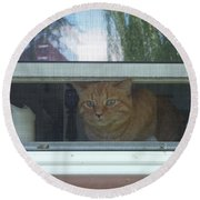 Let Me Out Cat Picture Round Beach Towel