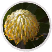 Leucospermum  -   Yellow Pincushion Protea Round Beach Towel