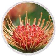 Leucospermum Pincushion Protea Flower - Tropical Sunburst - Hawaii Round Beach Towel