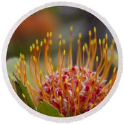 Leucospermum Pincushion Protea - Tropical Sunburst Round Beach Towel