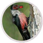 Lewiss Woodpecker With Fruit In Beak Round Beach Towel