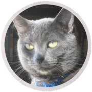 Library Cat Round Beach Towel
