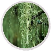 Lichen Hangs From A Tree  Corvallis Round Beach Towel
