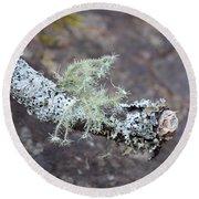 Lichens 2013 Round Beach Towel