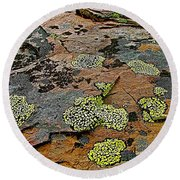 Lichens Along Trail To Plain Of Six Glaciers In Banff National Park-alberta-canada Round Beach Towel